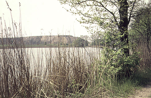Rybník Černý