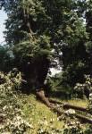 Vichřice - škody v parku zámku